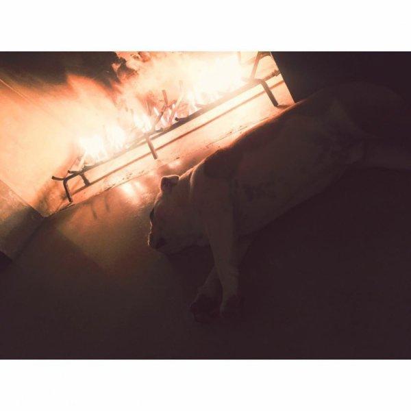 Bill instagram : probiers mal mit Gemütlichkeit .. #pumbi #sunday #fireplacechillin