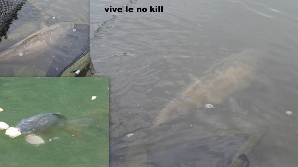 vive le no kill