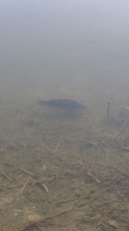 Petite pêche rapide