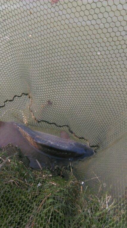 Petite pêche