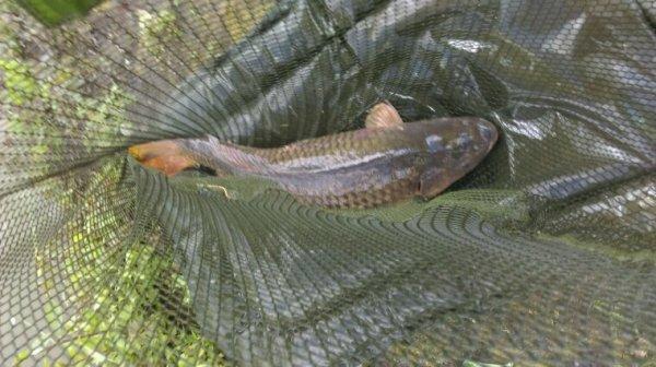Pêche à la canne suite