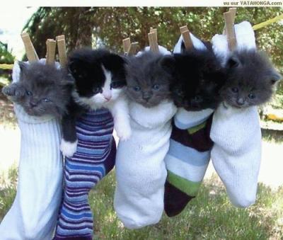 trop mais trop mimi les petit chaton