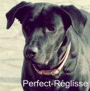 Photo de Perfect-Reglisse