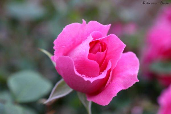 Voir la vie en rose :)