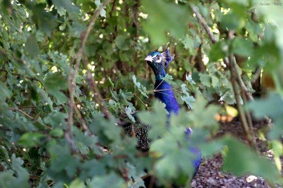 Le Parc des Oiseaux (01).Régalges : Objectif 17-40 mm, mode automatique, mise au point manuelle.  Un avis sur ces photos ? Un conseil ? Une remarque ?