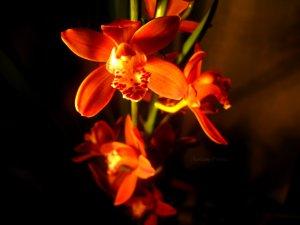 Des fleurs (encore...!)