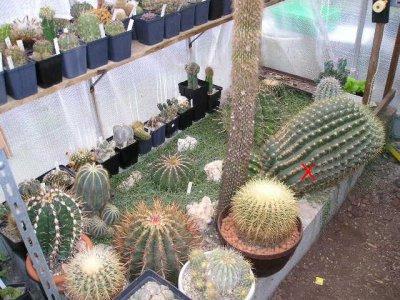 cactus jardin. Black Bedroom Furniture Sets. Home Design Ideas