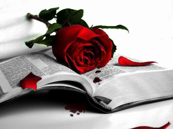 un livre, une rose, la vie,le destin, la douceur,l'amour...