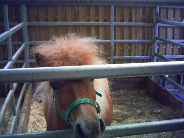 Bun Tristan,,un poney c'est comme un cheval en plus petit & sa fait Huhu :P
