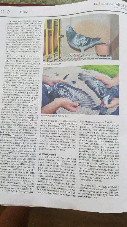 Article la France colombophile