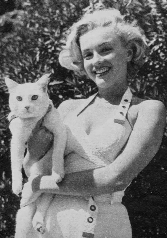1951 / La belle année pour Marilyn / La Fox lui garantissait un salaire de 500 $ par semaine, qu'elle joua ou pas. Le studio se réservait le droit de reconduire le contrat l'année suivante, auquel cas son salaire s'élèverait à 750 $ par semaine. La troisième année, elle percevrait 1 250 $ par semaine, la quatrième année 1 500 $, la cinquième année 2 000 $ et 2 500 $ la sixième année. Si elle travaillait toujours pour la Fox en 1957, elle recevrait 3 500 $ par semaine. Une clause d'exclusivité la liait à la Fox pour une durée de sept ans. Les dirigeants du studio avaient le droit de la renvoyer à la fin de chaque année sans aucune explication, mais ils s'octroyaient également le droit de lui imposer les rôles de leur seul choix. Aussi pouvaient-ils la « louer »  au prix de leur convenance à une autre compagnie, en lui versant uniquement son cachet hebdomadaire. Par ailleurs, Marilyn devait s'engager à refuser toutes proposition venue de l'extérieur (y compris la télévision, le théâtre ou la chanson), même si elle ne jouait dans aucun film de la Fox. Ce genre de conventions mettait les acteurs sous contrat à la merci des grandes compagnies du cinéma. Le procédé perdurera jusqu'au démantèlement du système lui-même, auquel Marilyn apportera largement sa contribution. Quand elle signa son contrat (qui ne prendra effet que le 11 mai 1951), Marilyn obtint que son professeur d'art dramatique, Natasha LYTESS soit aussi engagée. Celle-ci touchait 500 $ par semaine de la Fox, plus 250 $ que Marilyn lui versait pour des cours particuliers. En conséquence, la première année où Marilyn fut à la Fox, Natasha LYTESS gagna plus d'argent qu'elle. Mais Marilyn fut à nouveau précipitée dans la ronde des rôles stéréotypés et inintéressants.