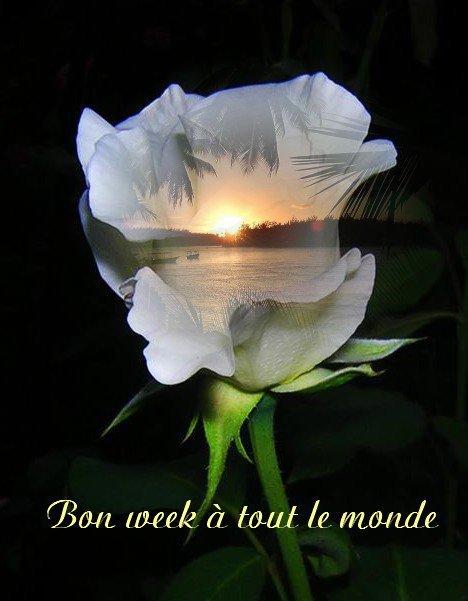WEEK-END.....UN PEU D'HUMOUR!!!!  ET DU SOLEIL.