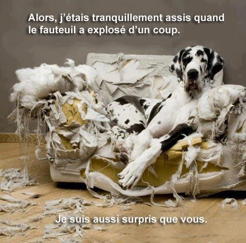 WEEK-END.....UN PEU D'HUMOUR!!!!
