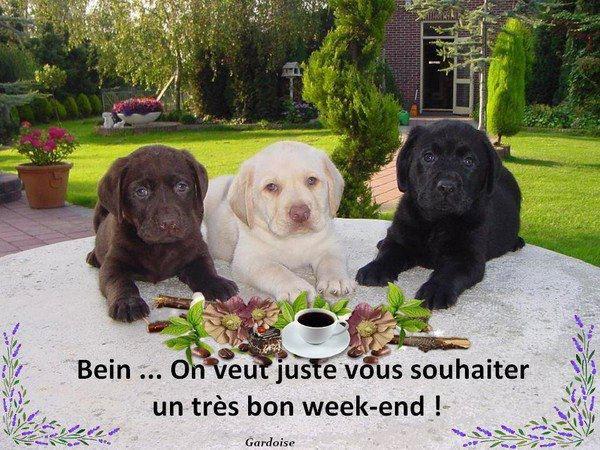 WEEK-END.....HUMOUR .........ET ENCORE DE LA NEIGE!!!