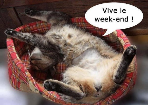 DU SOLEIL ET LE WEEK-END.......SUPER!!!!!!!!!!