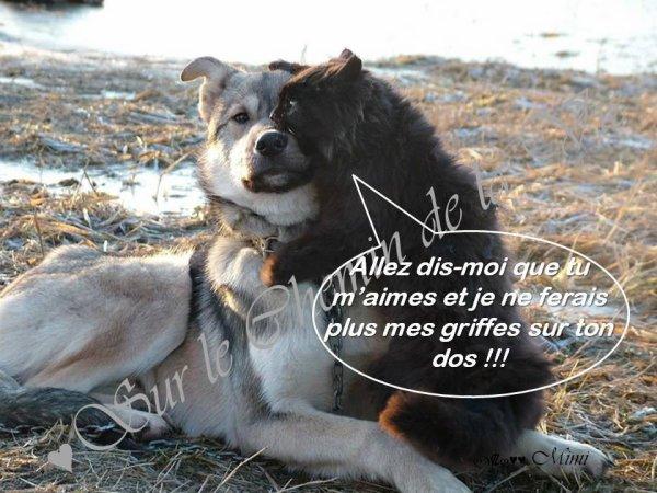 PETIT CLIN D'OEIL A NOS AMIS A 4 PATTES.