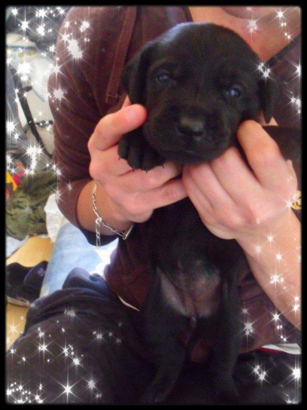Indy, ma petite chienne que j'aurais bientôt :)
