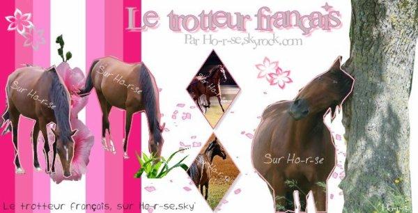 __________◊ Le trotteur français___________________________Ho-r-se___________________________