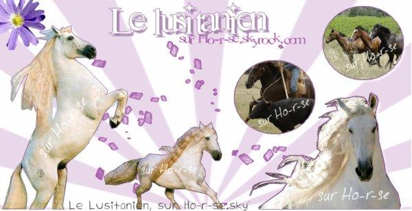__________◊ Le lusitanien____________________________Ho-r-se_____________________________