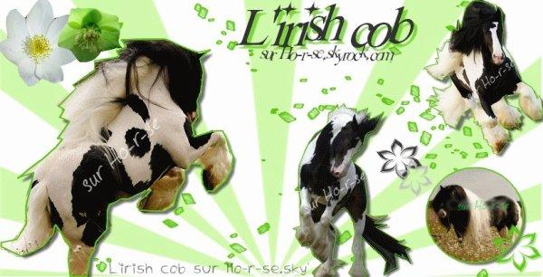 __________◊ L'irish Cob________________________________Ho-r-se____________________________