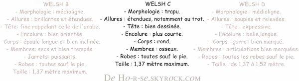 __________◊ Le Welsh______________________________Ho-r-se______________________________