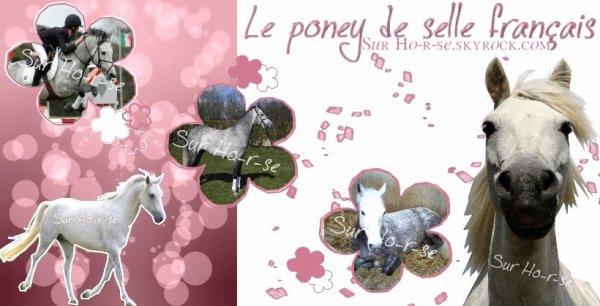__________◊ Le poney français de selle___________________________Ho-r-se_____________________