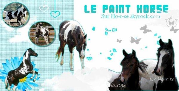 __________◊ Le paint horse_______________________________Ho-r-se____________________________