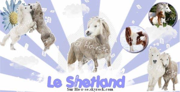 __________◊ Le shetland_______________________________Ho-r-se_♥___________________________