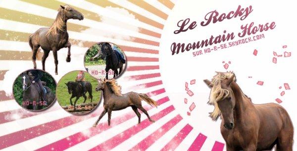 __________◊ Le Rocky Mountain Horse______________________________Ho-r-se_♥_________________________