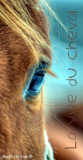 ___________◊ La vue du cheval_____________!_____________________Ho-r-se_♥_____________________