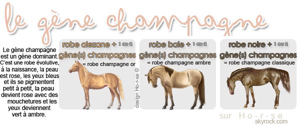 ___________◊ Le gène champagne_______________________________Ho-r-se_♥_______________
