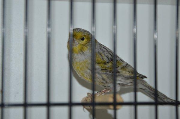 male noir pastel jaune mosaique