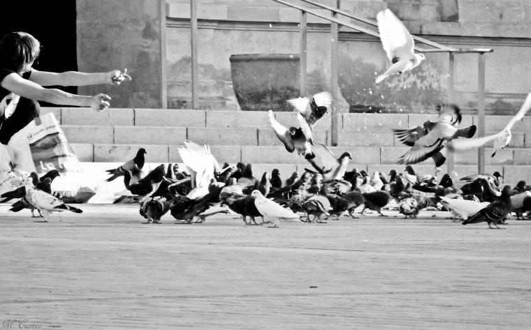 La dame aux pigeons