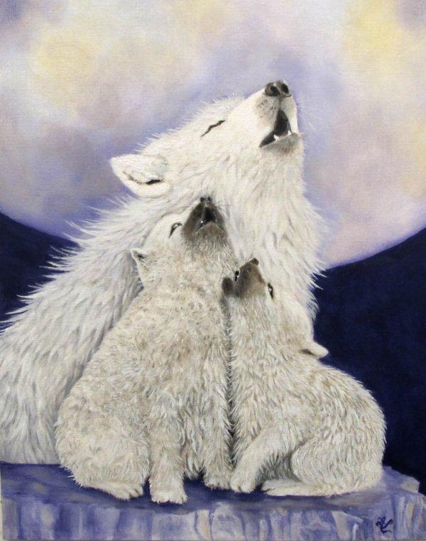 la louve et ses petits mon dernier