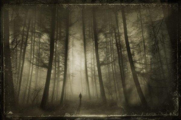 Ma forêt maudit