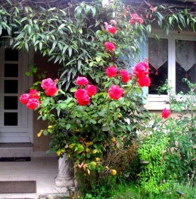 La fleur rose
