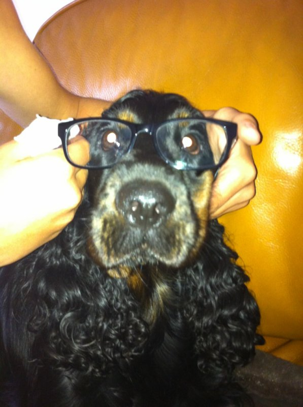 Mon chien adore !!❤