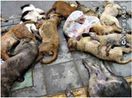 LES CHATS ET LES CHIENS SONT NOS AMIS, PAS DE LA NOURRITURE ! (clic animaux)