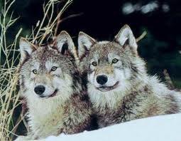 l'hiver des animaux!
