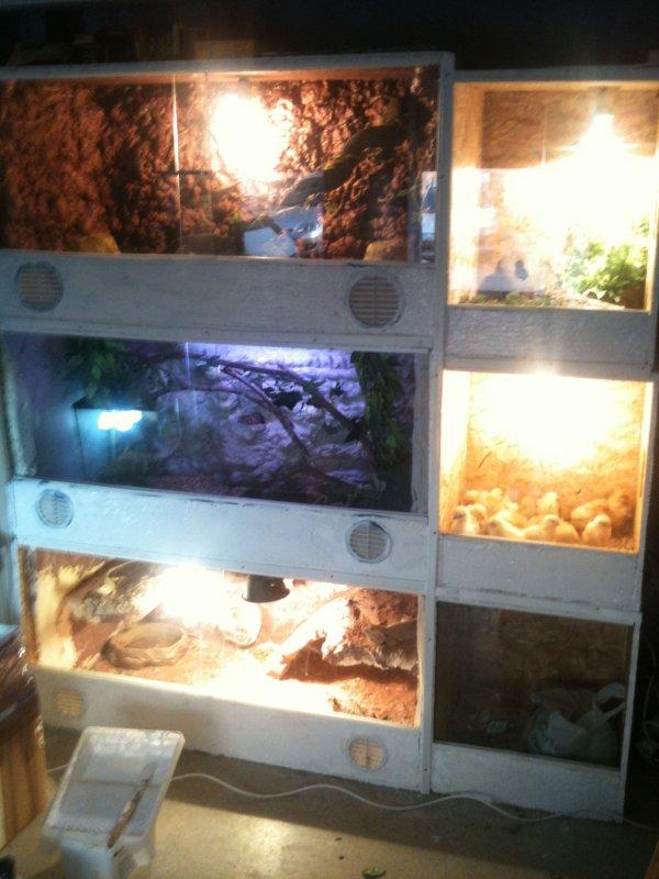mes terarium a reptile