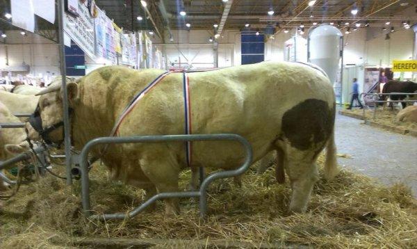 Agrimax charolais de 1700 kilos