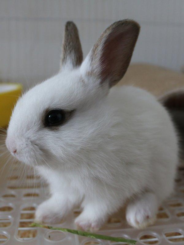 Bébés Thỏ.