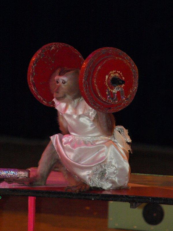 Le cirque !..