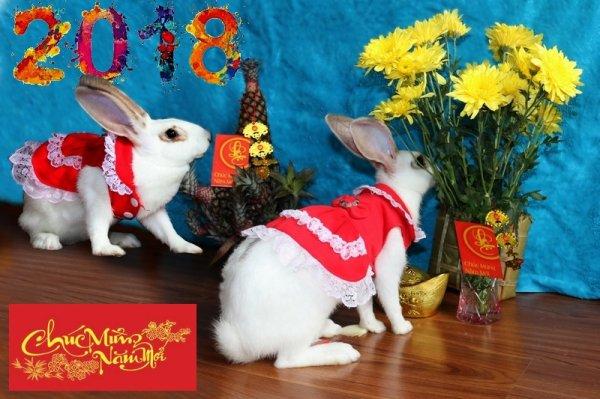 Chúc Mừng Năm Mới... bis.