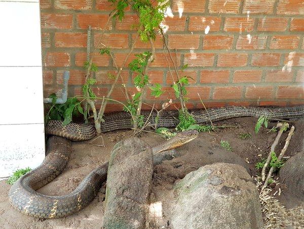 Attention Hồ serpent.