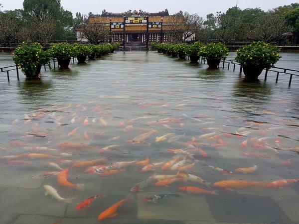 Les pieds dans l'Hồ.