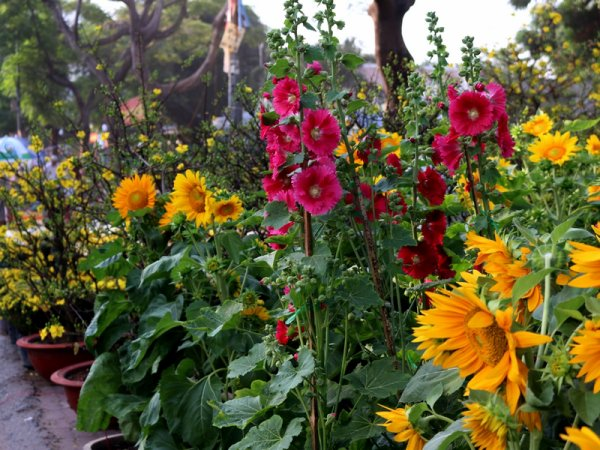 Fleurs en p'Hồts.