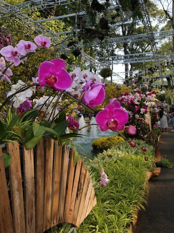 Hồ-tres fleurs.