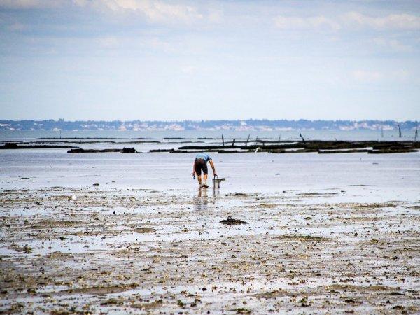 À la pêche Hồ moules, moules, moules !..