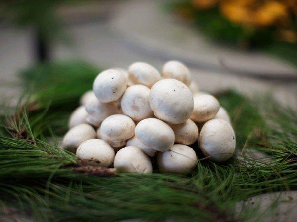 Un peu de mycol'Hồ-gie.